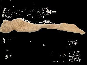 豚直腸(てっぽう)_0